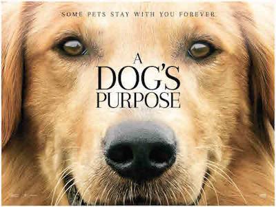 A Dog's Purpose Family Film