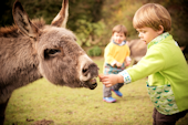 Child friendly farm holidays in South Devon